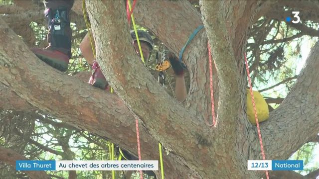 Alpes-Maritimes : opération rafraîchissement pour les arbres centenaires de la villa Thuret