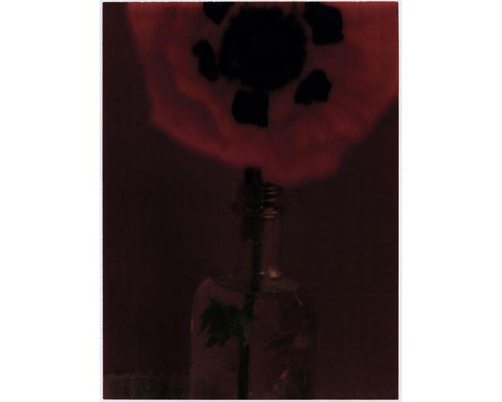 """Sarah Moon, """"Le Pavot"""", 1997 (© Sarah Moon)"""