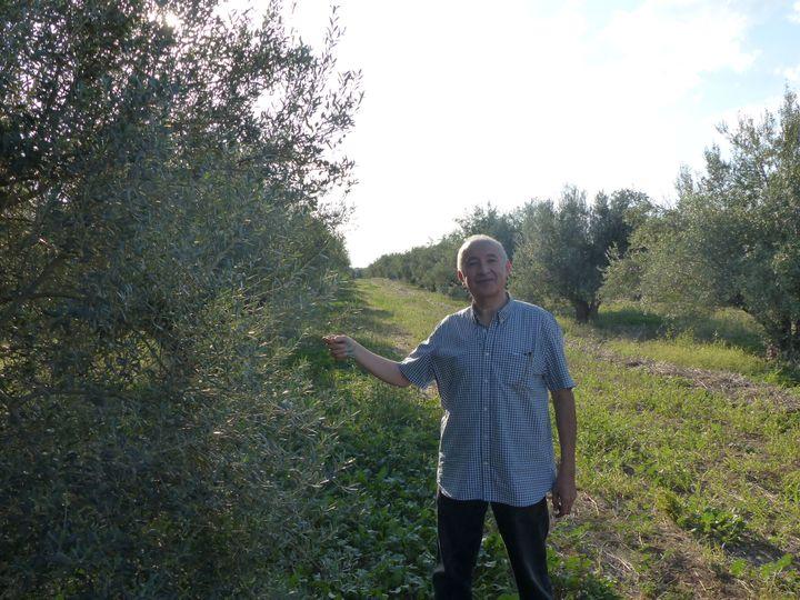 Le directeur général des Moulins Mahjoub, Abdelmajid Mahjoub, dans l'une des oliveraies de l'entreprise à Teboura (30 km à l'ouest de Tunis), le 17 octobre 2019 (FTV - Laurent Ribadeau Dumas)