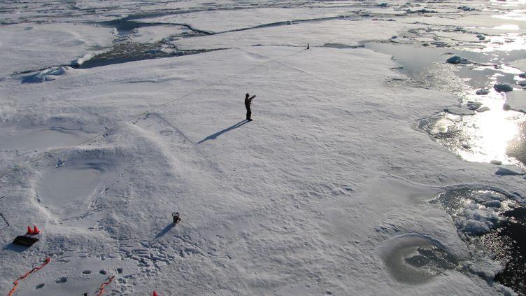 Un scientifique tente d'identifier les facteurs entraînant la fonte de la banquise arctique, à 800 km du pôle Nord, le 3 septembre 2011. (STUART MCDILL / REUTERS)
