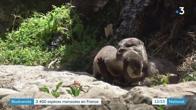 Environnement : des milliers d'espèces menacées en France