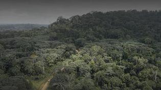 Au Gabon, des scientifiques partent à la recherche de virus encore inconnus, mais présents chez les animaux sauvages, au cœur de la forêt. (FRANCE 2)