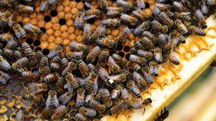 Les néonicotonoïdes menacent les insecte et particulièrement les abeilles. (FRANCIS CAMPAGNONI / MAXPPP)