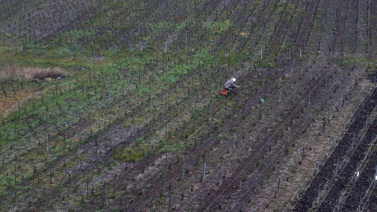 Des vignes de champagne près de Reims (Marne), le 30 mars 2016. (MAXPPP)