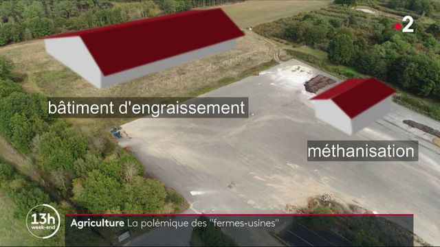 Agriculture : polémique autour des fermes-usines