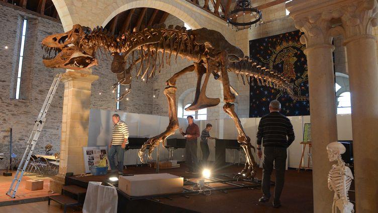 Stan le T-Rex exposé à Angers en 2013. (CLAIR JOSSELIN / MAXPPP)