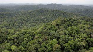 La forêt guyanaise dans les environs du village de Saül, le 2 mars 2007. (JODY AMIET / AFP)