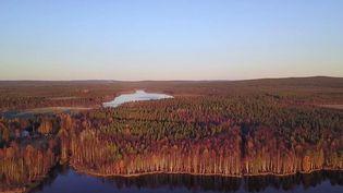 Les vieux arbres sont coupés dans les forêts, car ils absorbent moins de CO2 que les jeunes pousses. Néanmoins, ce choix a des conséquences sur la faune et la flore. Reportage en Suède. (Franceinfo)