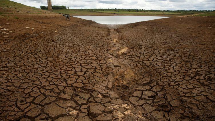 Lac de barrage atteint par la sécheresse près de Bulawayo, dans le sud-ouest du Zimbabwe. Photo prise le 18 janvier 2020. (REUTERS - PHILIMON BULAWAYO / X02381)