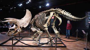 Le triceratops Big John, mis en vente le 21 octobre à Paris, chez Drouot. (CHINAPHOTOPRESS / MAXPPP)
