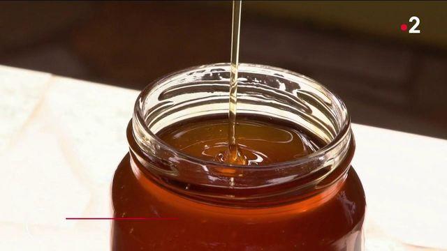 Apiculture durable : le miel de karité, un trésor venu du Bénin