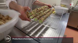 C'est un coup de blues qui touche les producteurs d'escargots. À cause de la crise sanitaire, les restaurants sont fermés et leurs ventes ont logiquement plongé. Étant donné leur faible nombre, ils ont bien du mal à se faire entendre. (France 2)