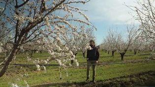 En Provence, la floraison des amandiers a commencé. Pendant trois semaines , les arbres arboreront les pétales blancs si caractéristiques, avant de réjouir les producteurs et amateur de nougat. (France 3)