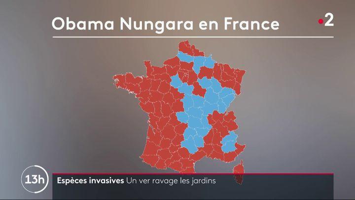 Capture d'écran de France 2 montrant une carte des départements français où la présence du ver Obama nungara a été signalée. (FRANCE 2)