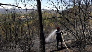 Un pompier éteint les dernières flammes d'un feu de forêt entre Correns et Montfort sur Agens, dans le Var, le 19 juillet 2016. (FRANCK PENNANT / AFP)