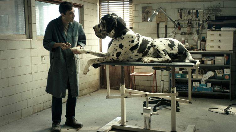 "Marcello Fonte dans ""Dogman"" de Matteo Garrone  (Greta De Lazzaris)"