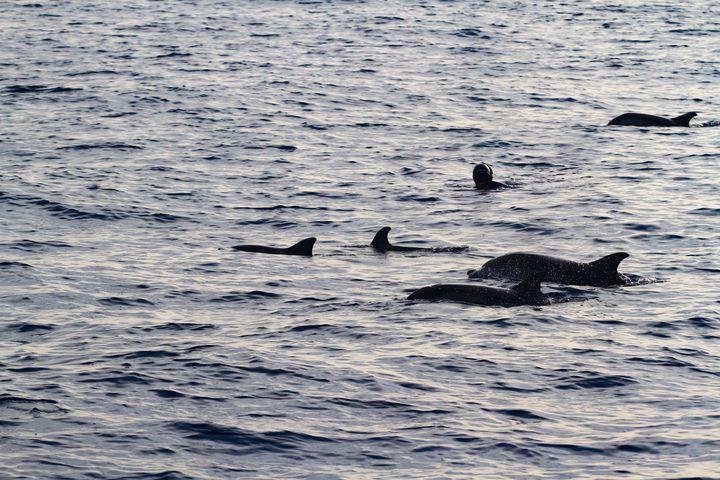 Michel Nox, au milieu des dauphins, lors de sa traversée de la Méditerranée.  (GABRIELLE.PROMPT)