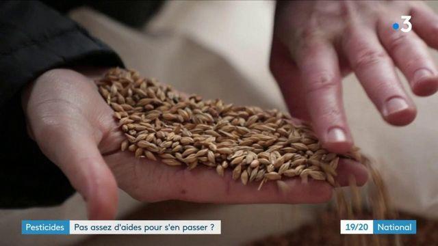 Agriculture : des dysfonctionnements dans l'attribution des aides pour se passer des pesticides ?