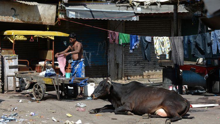 Une vache sacrée dans le quartier deNew Delhi, le 16 mars 2014. (SAJJAD HUSSAIN / AFP)
