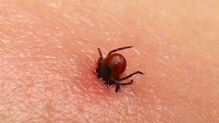 Maladie de Lyme : le nombre de nouveaux cas à la hausse en 2018