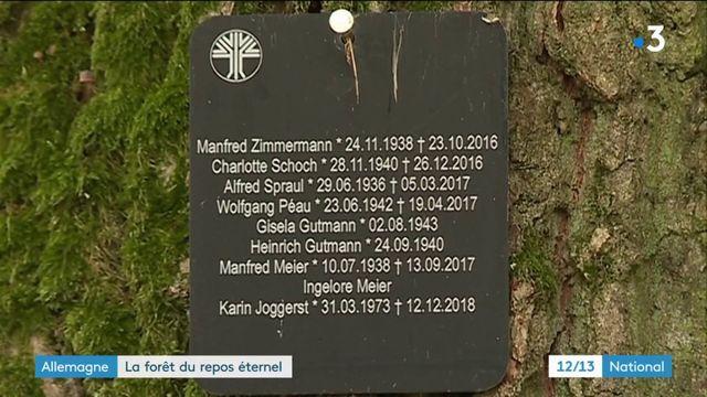Allemagne : la forêt cinéraire de Rheinau offre un repos éternel