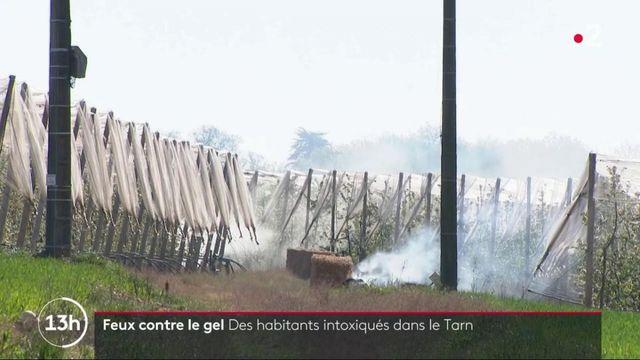 Tarn : des habitants intoxiqués par des feux allumés contre le gel par des agriculteurs