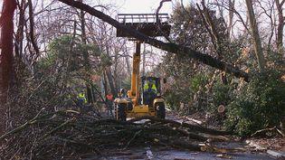 Des arbres déracinés jonchent une route de La Rochelle le 28 décembre 1999 au lendemain de la tempête qui s'est abattue en Charente-Maritime (MICHEL GANGNE / AFP)