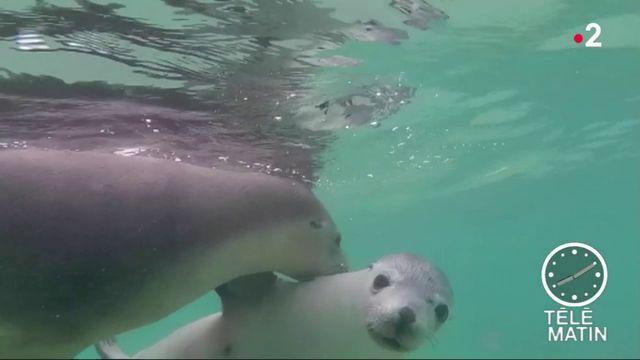 La pollution sonore des bateaux stresse les animaux marins