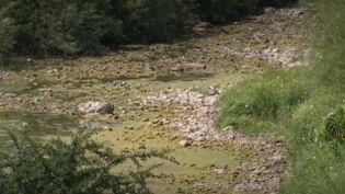 Avec les fortes chaleurs et la sécheresse, certaines rivières sont littéralement à sec. Le Doubs a de nouveau disparu par endroit entre Pontarlier et Morteau. Si la situation n'est pas encore critique, elle pourrait très vite le devenir. (France 3)