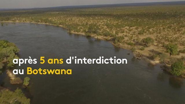 modM-W-botswana-sans-sous-titre-chasse-éléphants-vincentV2