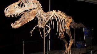 La justice américaine soupçonne Eric Prokopi, un Américain de 38 ans, d'avoir acheté ce squelette de tyrannosaure bataar au marché noir. (REUTERS )