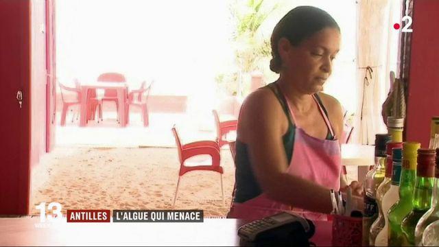 Antilles : un plan d'urgence contre les algues brunes