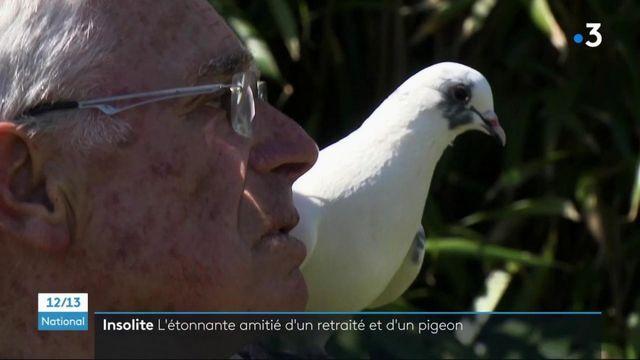 Côtes-d'Armor : la touchante amitié entre un retraité et un pigeon