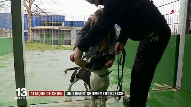 Val-d'Oise : un enfant de 9 ans attaqué par un chien
