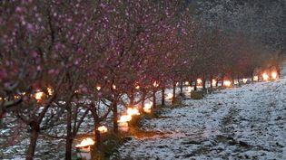 Des bougies anti-gel brûlent pour protéger les arbres du froid dans un verger, à Westhoffen(Bas-Rhin), le 6 avril 2021. (FREDERICK FLORIN / AFP)