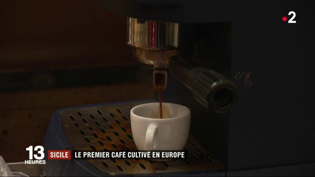 Italie : à la découverte du premier café produit en Europe