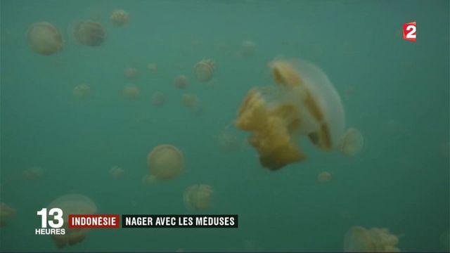 Indonésie : nager avec les méduses à Kakaban