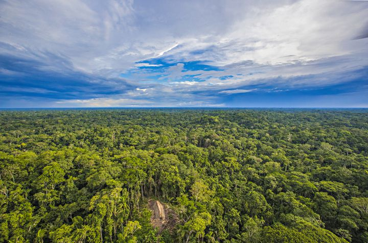 """Une vue aérienne d'une longue maison de la tribu des """"Indiens isolés du cours supérieur de la rivière Humaitá"""", dans l'Etat brésilien d'Acre. (RICARDO STUCKERT)"""