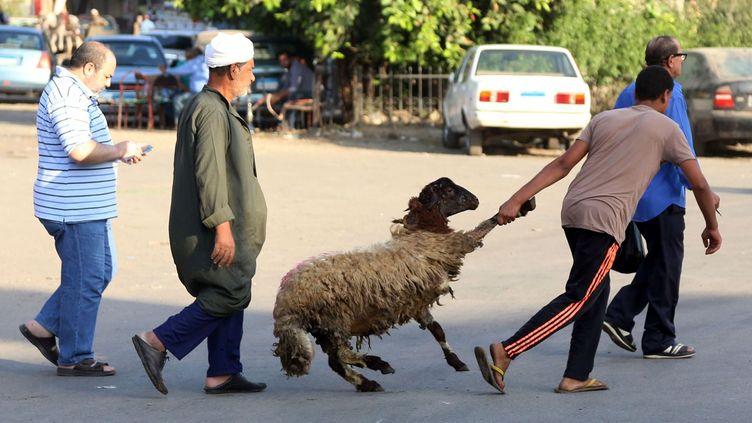 Pour la préparation de la fête, les rues sont noires de monde. Des millions de moutons attendent le sacrifice, souvent pratiqué en masse par des bouchers improvisés, selon un rituel très précis. «Vous trouvez (les animaux) au coin de la rue, ou entassés dans une voiture isolée en train de vous regarder. Ils peuvent aussi vous couper la route en passant brusquement devant vous», raconte le journal «Daily News Egypt». Tout le pays se prépare donc à une grosse consommation de viande, même les plus pauvres qui ne peuvent pas souvent s'en procurer. Un moment redouté par les… végétariens. Minoritaires, ceux-ci fuient les villes pour ne pas avoir à supporter les odeurs de sang et de viande. (Xinhua - Sipa - Ahmed Gomaa)