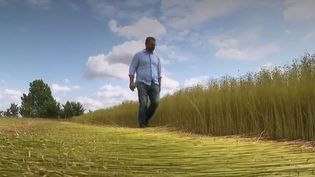 Le lin est redevenu une filière d'avenir. En France, plus de 100 000 ha sont cultivés et l'activité va croissant d'année en année. (FRANCE 2)