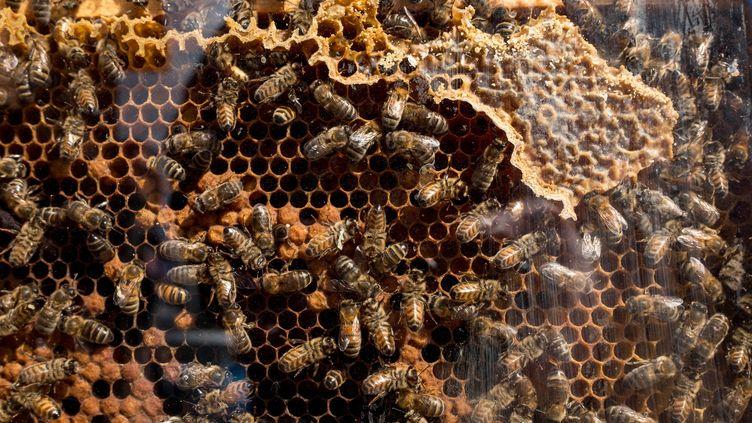 Une ruche lors dufestival de l'abeille sauvage et domestique et de la biodiversité urbaine, à Villejuif (Val-de-Marne) le 10 avril 2016. (MAXPPP)