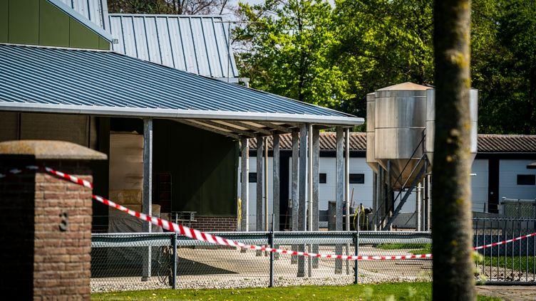 Une ferme d'élevage de visons fermée après la découverte de cas d'animaux contaminés au Covid-19, à Beek en Donk aux Pays-Bas, le 26 avril 2020. (ROB ENGELAAR / ANP)