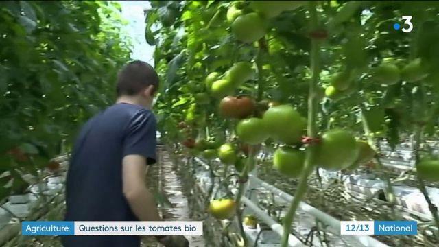 Agriculture biologique : vers un encadrement de la production sous serre ?