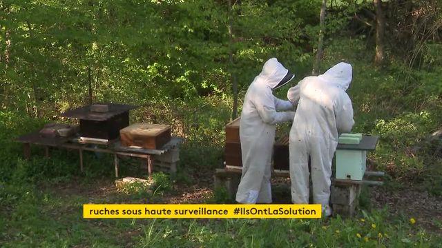 les ruches sous surveillance