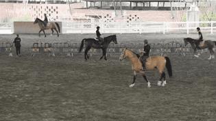 Le cheval, le nouveau dada de la Chine (FRANCE 2)