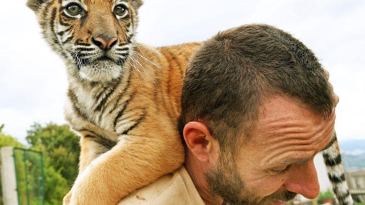 Un bébé tigre recueilli après avoir été abandonnéàSaint-Ouen (Seine-Saint-Denis), en juin 2016. (RICHARD MOUILLAUD / MAXPPP)
