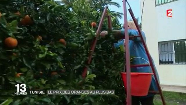 Tunisie : surproduction d'oranges
