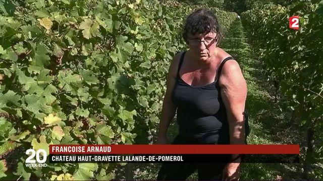 Bordelais : des vols de raisins en série sur fond de récoltes en baisse