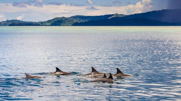 Des dauphins à Mayotte, en février 2009. (BRUSINI AURELIEN / HEMIS.FR / AFP)