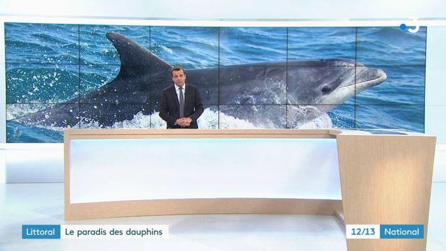 Charente-Maritime : quand les plaisanciers naviguent au milieu des dauphins